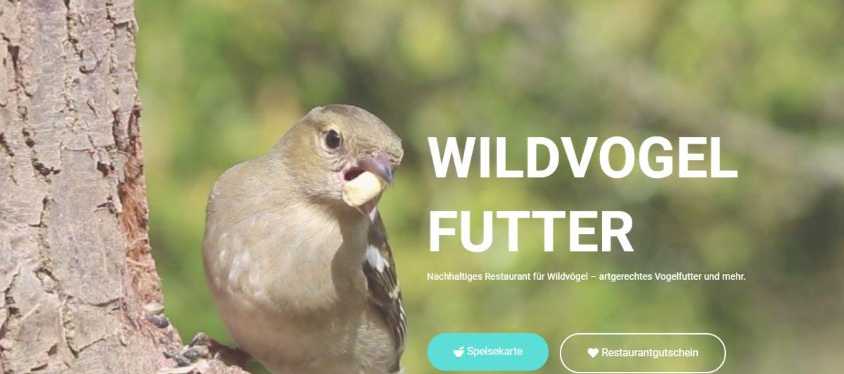 SchülerInnen gründen Startup für Wildvogel-Futter: Echte Firma und aktiv fürNaturschutz
